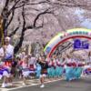 2020年(令和2年)相模原『市民桜まつり』4月4日(土)、5日(日)開催!