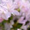 遅い春  カメラと散歩