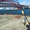 【釣行編】神戸、北公園でワインドとジグサビキ!
