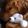 抱き枕になってもらう
