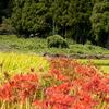 奈良県葛城、御所市にて、彼岸花やら収穫間際の田んぼの情景やらを撮影してからのルクア1100のLUCUA アウトドア from ALBiを視察