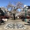 枝・つぼみ・満開・花見・ライトアップなど「桜」関連の英語を学びます。