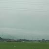 台風の影響で稲がなびく