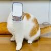 ヨーグルトが好きすぎて、遂にはヨーグルトと一体化しちゃう猫