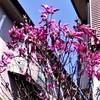 2020-03-26 どこ吹く風