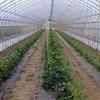多品目農業も面白い