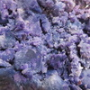 シャドークィーン 紫のじゃがいもです。