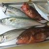 日本海釣り魚定食