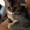 猫さんのフードはポイント5倍の日