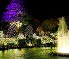 箱根強羅公園スプリングナイトガーデン内覧会に参加!素敵な夜の箱根
