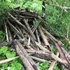 今日は、古い竹の始末