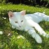 きょうの猫村さん知ってますか?猫村さんから学ぶことはたくさんあります。