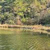 緑ヶ池の手漕ぎボート