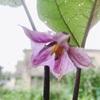 """畑からこんにちは! 0909   """" 畑に花が満開です!🌸 """"   のんびり楽しむ家庭菜園!"""