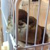 スズメ、二度寝のフワモコ