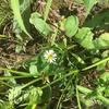 ユーミンも愛した春の野草