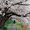 桜の散歩道(今日は雨) No.3