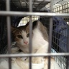 2013 7月 のら猫手術。