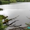 苔と原生林に囲まれた『白駒池』《#3》 ― 湖畔の風景 ―