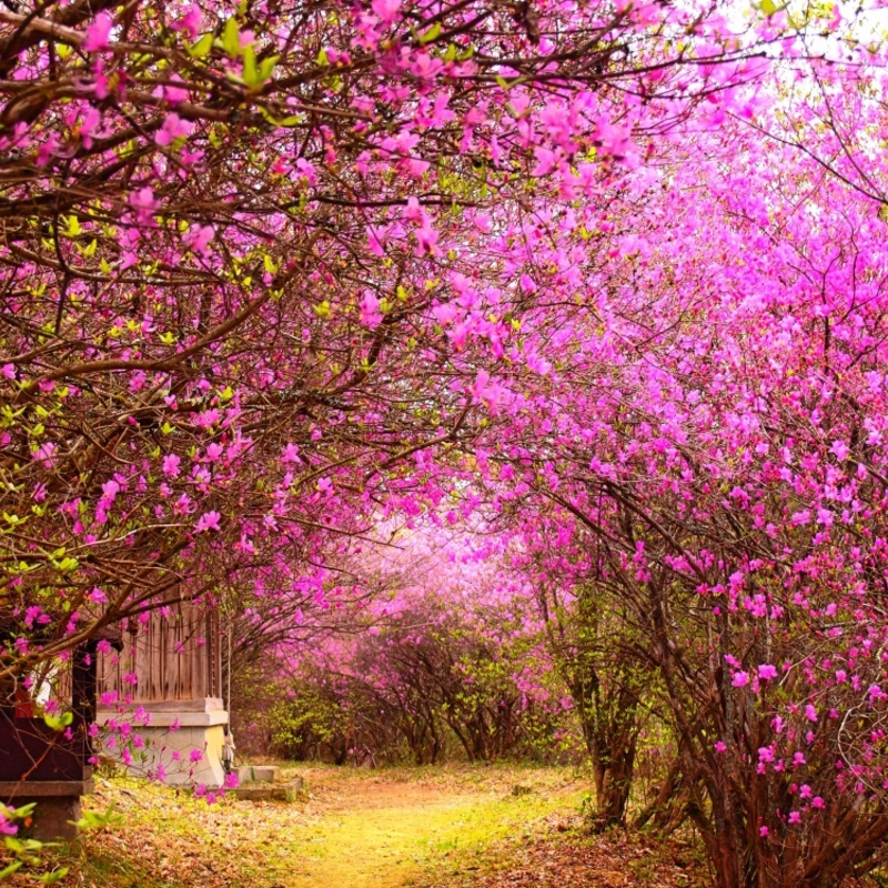 桜が散っても次はコレ♪プラスワンが楽しめるツツジの名所7選