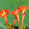 日本 秋の野に咲くオレンジの花