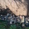 薪ストーブ始生代85 様々などんころ薪を焚く