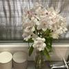 【花を飾る】#5 薄桃色のアリストロメリア