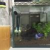 ベタ水槽立ち上げ顛末記⑨ 発酵式CO2添加装置