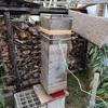 採蜜 蜂は居るが少ない Taking honey