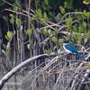 沖縄で青い鳥