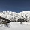 エイブル白馬五竜スキー場 19-20シーズンレポート 滑走日数 11