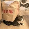 未確認生物『猫つむり』を発見