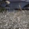 旅日記 本州:京都、滋賀、広島
