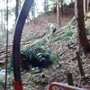 木材搬出と松枯れ木
