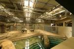3月12日オープン! 国内初の屋内プールを備えた、円山動物園のゾウ舎を鑑賞してきました!