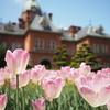 春の北海道旅行:2日目は札幌観光!まずは北海道庁旧本庁舎へ