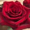 ロンドンのバレンタイン・デー。薔薇とカードとピエール・マルコリーニ。