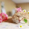 『贈ろう、飾ろう インドアグリーンと小さな花鉢』杉原梨江子
