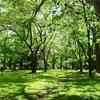 初夏の札幌#2 (北海道大学植物園)