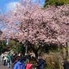 絵画鑑賞と桜