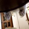 【肉球の日】猫さんを愛でるしかない日【猫さんと暮らす】