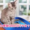 猫の便秘は何日までなら平気なの?