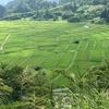 日本の棚田百選「大蕨」と「椹平」の棚田を見てきました