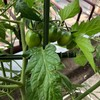 夫の家庭菜園︰今年もはじまひました