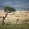 ティンダーは地球を救う!?アフリカで行われた奇想天外の動物愛護キャンペーン/ The World's Most Eligible Bachelor