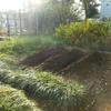 ハルウコン土寄せ スズメバチ対策