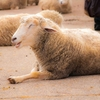 写ルンですを使って旅行にいくぞ!【③六甲山牧場で動物を撮る編】