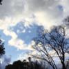 季節それぞれ・冬の公園