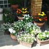 7月の花壇。。