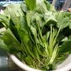 家庭菜園(1)葉物野菜